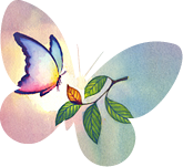 SIMBA butterfly